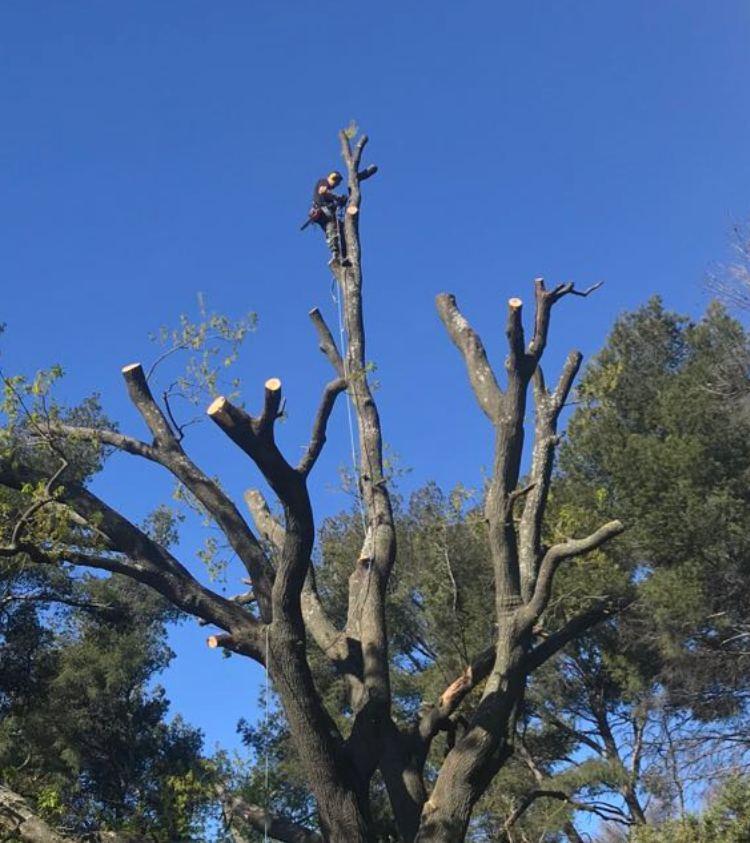élagage d'arbres Lyon