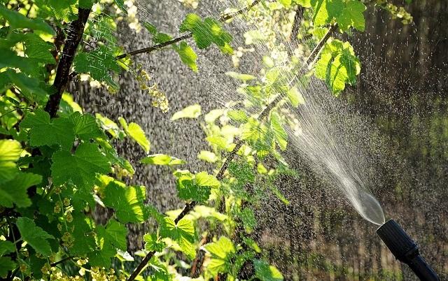 Traitement des arbres Tassin-la-Demi-Lune